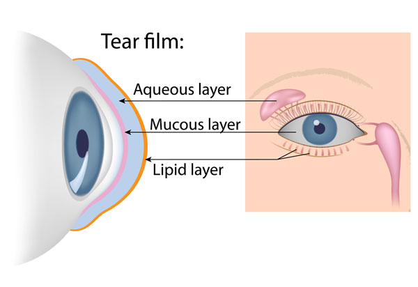 What is the Tear Film Diagram